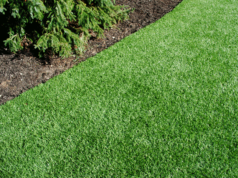 how to know if you watered the grass too much